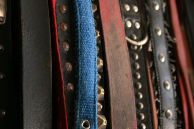 Collares de cuero o nylon, acolchados, anchos y cómodos. Con cierre de hebilla son mucho más seguros.